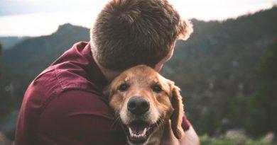Hav pengene i orden, når du skal have et kæledyr