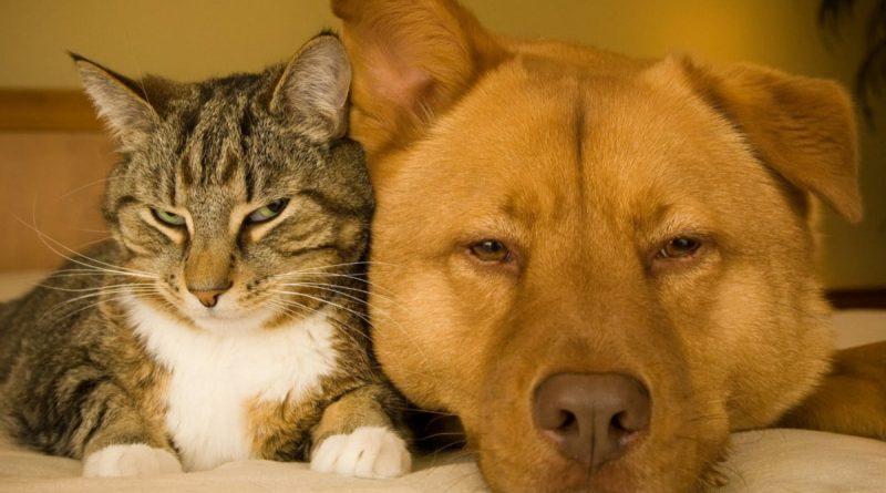 Tips til hunde- og katteejere: Giv dit kæledyr et sundt liv