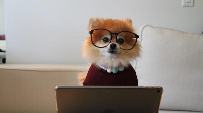 Første hund? Find gode råd og vejledning online